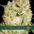 Northern Lights (Vision Seeds)