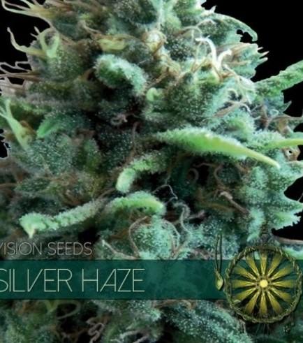 Silver Haze (Vision Seeds)