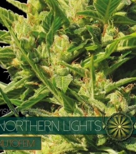 Northern Lights Autoflowering (Vision Seeds)