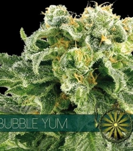 Bubble Yum (Vision Seeds)