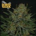 Double Glock (Ripper Seeds)