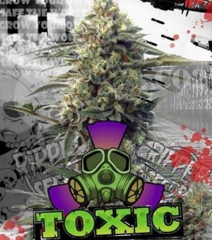 Toxic (Ripper Seeds)