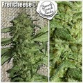 Frencheese (French Touch Seeds)