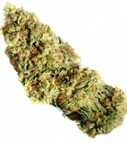 Dr. Greenthumbs Em-Dog (Humboldt Seeds)