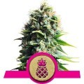 Pineapple Kush (Royal Queen Seeds)