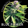 Blue Power (Vision Seeds)
