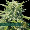 Crystal Queen (Vision Seeds)