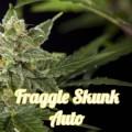 Fraggle Skunk Auto (Philosopher Seeds)