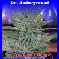 Brooklyn Mango (Dr. Underground)