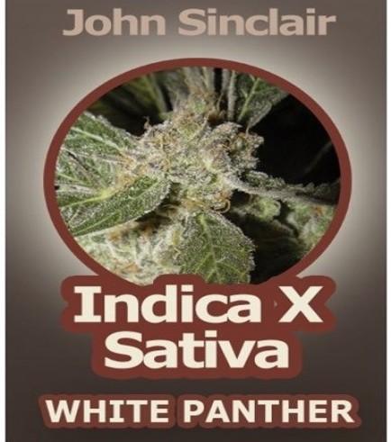 White Panther (John Sinclair Seeds)