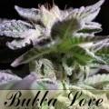 Bubba Love (Alphakronik Genes)