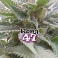 Kong 47 (Dr. Underground)