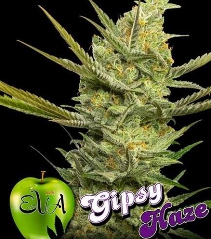 Gipsy Haze (Eva Seeds)