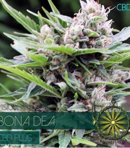 Bona Dea CBD (Vision Seeds)