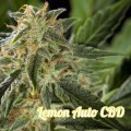 Lemon Auto CBD (Philosopher Seeds)
