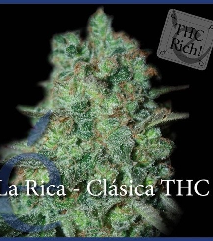 La Rica Classic THC (Elite Seeds)