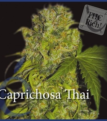 Caprichosa Thai (Elite Seeds)