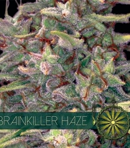 Brainkiller Haze (Vision Seeds)