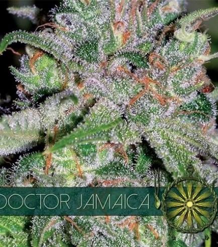 Doctor Jamaica (Vision Seeds)