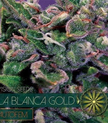 La Blanca Gold Autoflowering (Vision Seeds)