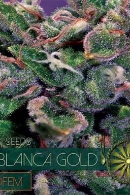 La Blanca Gold Autoflowering