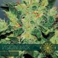 Vision Jack Autoflowering (Vision Seeds)