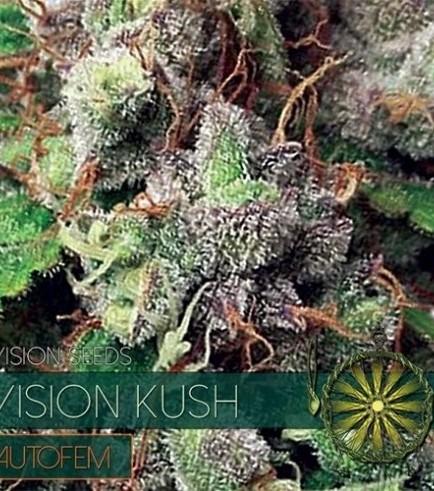 Vision Kush Autoflowering (Vision Seeds)