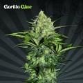 Gorilla Glue Auto (Auto Seeds)