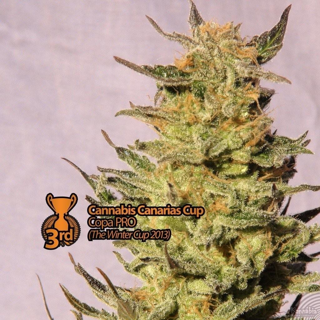 Карамель с коноплей как отражается марихуана