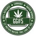 New Glue (GG Strains)