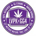 Purple Glue (GG Strains)