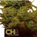Climax Autoflowering (CH9 Seeds)