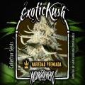Exotic Kush (KushBrothers)