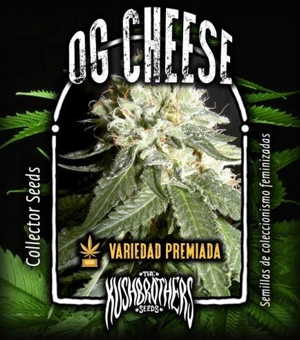 OG Cheese (KushBrothers)