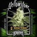 Yellowstone (KushBrothers)