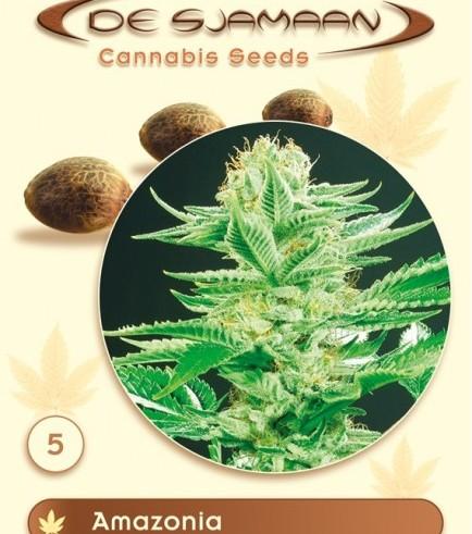 Amazonia (De Sjamaan Seeds)