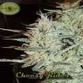 Cheesy Rider (Karma Genetics)