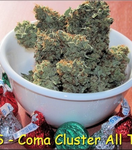 Coma Cluster (Kingdom Organic Seeds)