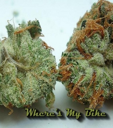 Where's My Bike (Karma Genetics)