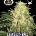 Legends Gold (Big Buddha Seeds)
