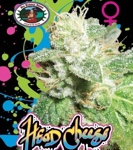Head Cheese (Big Buddha Seeds)