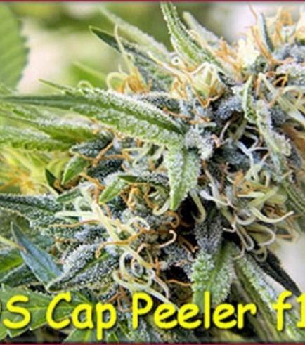 Cap Peeler (Kingdom Organic Seeds)