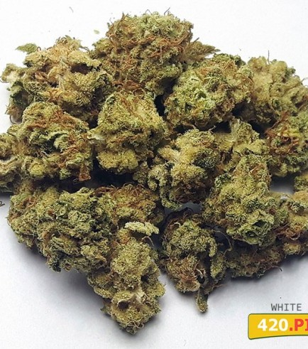 White Widow (420.pixels)