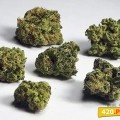 Blue Cheese (420.pixels)