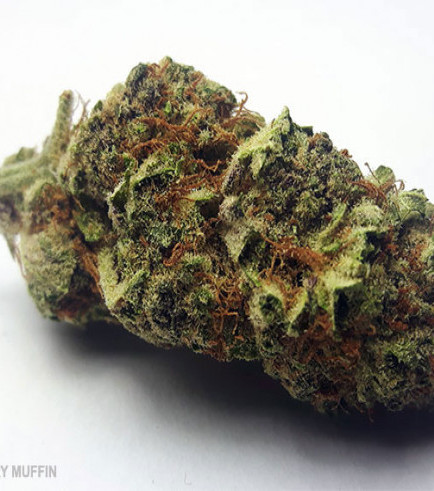 Blueberry Muffin (420.pixels)