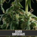 Silversurfer Haze (Blimburn Seeds)