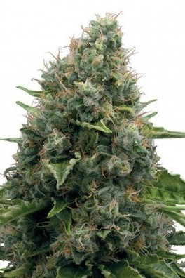 Power Skunk