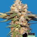 Big Bomb Auto (Bomb Seeds)