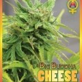 Big Buddha Cheese Automatic (Big Buddha Seeds)