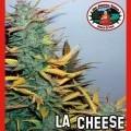 L.A. Cheese (Big Buddha Seeds)